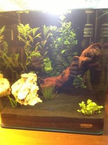 Mon nano aquarium 30L par syrose dans Nano aquariophilie image-e1361873610353-224x300